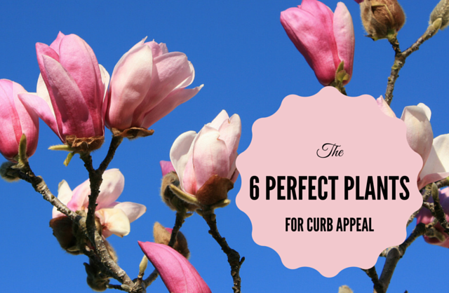 6-perfect-plants-for-curb-appeal